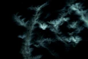 Terns at night