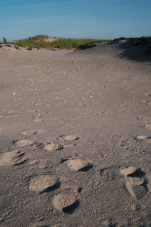 Someone else's footsteps on the trail to the Lighthouse. Could be USFWS, USDA, or someone wandering the island.