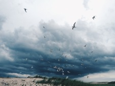 Terns and storm. This one actually bypassed the island completely.